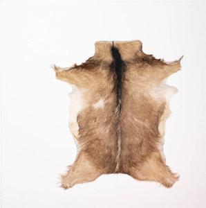KOELAP Geitenhuid - Bruin Egaal Geitenhuid - 75 x 90 cm - 1003895