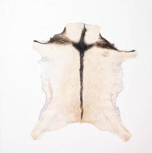 KOELAP Geitenhuid - Bruin Egaal Geitenhuid - 80 x 95 cm - 1003748